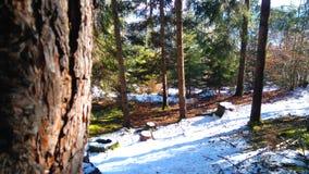 Natur av Österrike Royaltyfri Bild