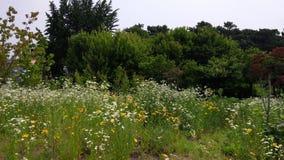 Natur av blommor Fotografering för Bildbyråer