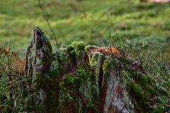 Natur av den urtids- skogen Fotografering för Bildbyråer