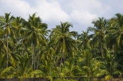 Natur av det Indien landskapet Arkivbild