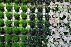 Natur av gröna växter Royaltyfria Foton
