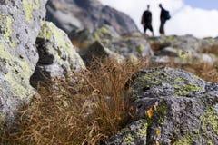 Natur av höga Tatras berg slovakia arkivfoton