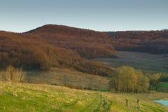 Natur av höstskogträd Arkivfoto