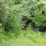 Natur av houston Royaltyfri Foto