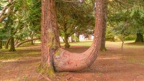 Natur av madeiraön Royaltyfri Bild