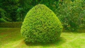 Natur av madeiraön Royaltyfri Foto