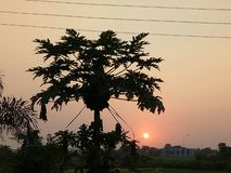 Natur av skönhetsolnedgångpunkt med trädet Royaltyfri Fotografi