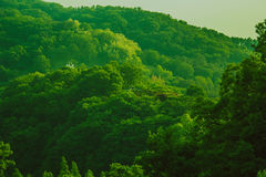 natur av Sydkorea royaltyfri bild