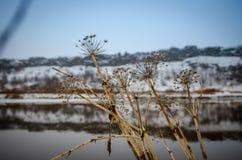 Natur av Thingvellir Royaltyfria Bilder