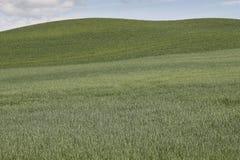 Natur av Toscana Royaltyfria Bilder