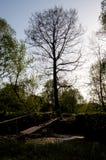 Natur av Ukraina Royaltyfri Foto
