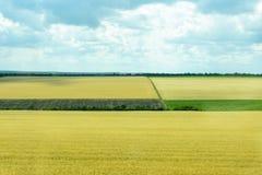 Natur av Ukraina Landskapet av ukrainska jordbruks- fält av sommarfält Lantgården Fält med havre, vete royaltyfria bilder