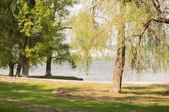 Natur: Bäume, grünes Gras und der Fluss Lizenzfreies Stockfoto