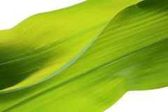 Natur background. With leaf texture royalty free stock photography