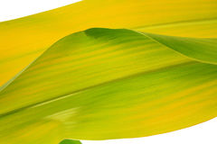Natur background. With leaf texture stock photos