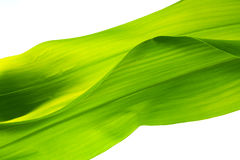 Natur background. With leaf texture stock image