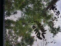 Natur behide Einschnitt Stockbilder