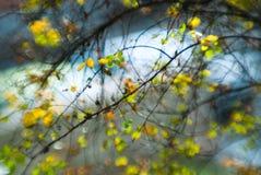 Natur belichtet Stockbild