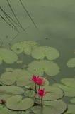 Natur besitzen Farbentwurf-cc$ii Lizenzfreies Stockfoto