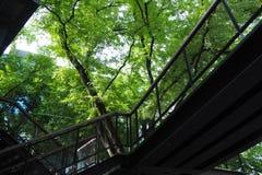 Natur beziehen sich mit modernem Stockbilder