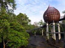 Natur, birdwatching Fell der Mangrove Stockfotografie