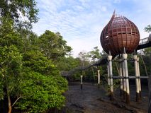 Natur birdwatching skinn för mangrove Arkivbild