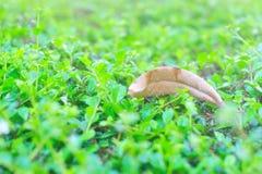 Natur-Blatt sterben im weichen Licht Lizenzfreies Stockbild