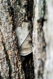 Natur-Blatt sterben im weichen Licht Stockfotos