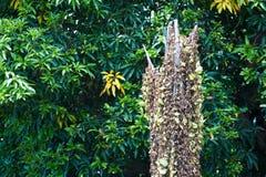 Natur-Blatt sterben im weichen Licht Stockbilder