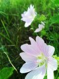 Natur blommor Royaltyfri Fotografi