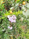 Natur, Blumen, süße Blumen, schaut große, denkwürdige Blumen stockbilder