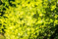 Natur bokeh Lizenzfreies Stockbild