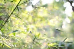 Natur bokeh abstrakter heller Hintergrund lizenzfreie stockbilder