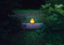 Natur candlelit stockbilder