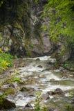 Natur Carpathians i regnet Royaltyfria Bilder