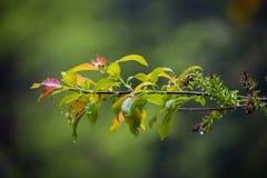Natur Carpathians i regnet Fotografering för Bildbyråer