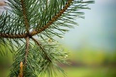 Natur Carpathians i regnet Royaltyfria Foton