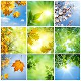 Natur-Collage Stockfotos