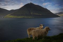 Natur in den Färöern Stockbild