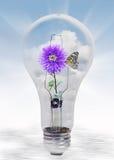 Natur in der Glühlampe Lizenzfreies Stockfoto