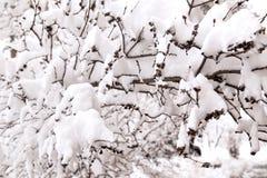 Natur in der Wintersaison Lizenzfreie Stockfotos