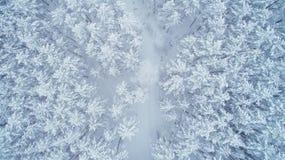 Natur des verschneiten Winters Lizenzfreie Stockfotografie