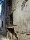Natur, die in den Straßen von altem Havana übernimmt Lizenzfreie Stockfotos