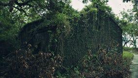 Natur, die ein altes verlassenes Haus zurückfordert Stockfotos