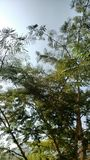 Natur drzewa Obrazy Stock