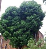 Natur drzewa i ro?liny zdjęcie royalty free