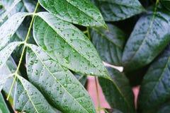 Natur efter regn royaltyfria foton