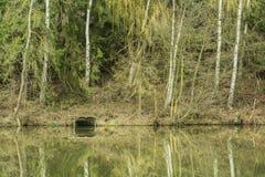 Natur - in einem Teich Stockbilder