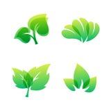 Natur-Eleganzsymbol grünen Blatt eco Designs freundliches und organische Vektorillustration der natürlichen Elementökologie Lizenzfreies Stockbild