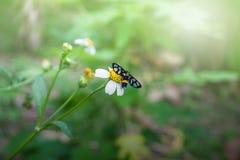 natur för bakgrundsfjärilsblommor Arkivfoto